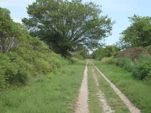 murdoch trail