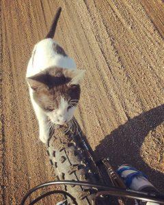 Obligatory cat photo!