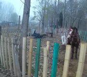 pony-and-steve
